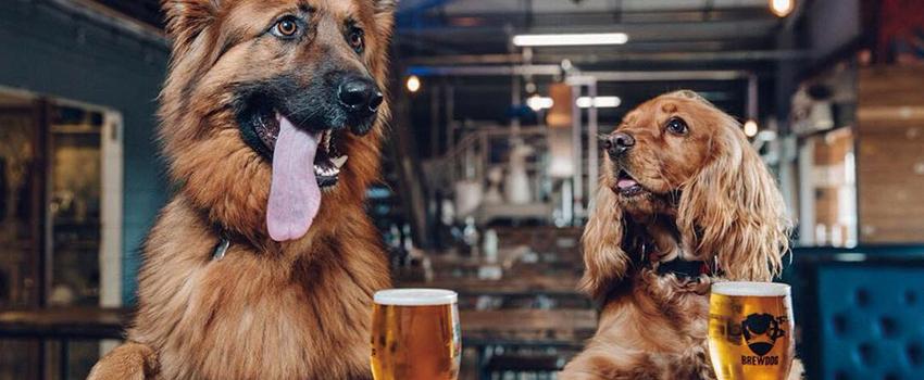 祝戌年!BrewDogフォトコンテスト『愛犬とパンクIPA』開催