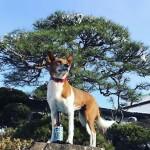 PUPPY DOG賞1