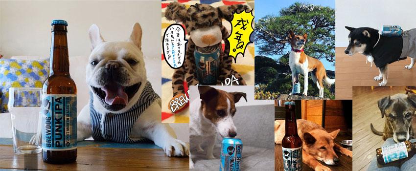 祝戌年!BrewDogフォトコンテスト『愛犬とパンクIPA』結果発表